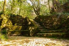 El jardín de Sintra cerca del palacio de Pena con el banco y las escaleras de piedra cubrió el musgo fotos de archivo libres de regalías