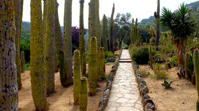 El jardín del cactus Imagenes de archivo