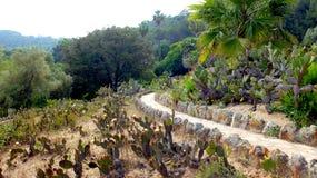 El jardín del cactus Fotos de archivo libres de regalías