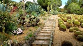 El jardín del cactus Imágenes de archivo libres de regalías