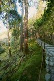 El jardín del musgo en Ginkakuji en Kyoto, Japón Imágenes de archivo libres de regalías