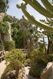 El jardín exótico de Mónaco Fotos de archivo