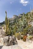 El jardín exótico de Mónaco Fotografía de archivo libre de regalías