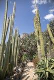 El jardín exótico de Mónaco Imagen de archivo libre de regalías