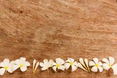 El jardín florece en la parte inferior sobre la tabla marrón que hizo de la madera Imagen de archivo libre de regalías