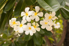 El jardín florece la floración en el jardín Imagen de archivo libre de regalías