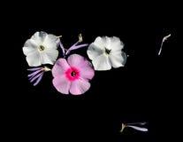 El jardín florece los pétalos fotos de archivo