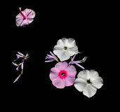 El jardín florece los pétalos imagen de archivo libre de regalías