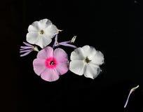 El jardín florece los pétalos imagen de archivo