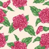 El jardín inconsútil floral del modelo florece peonías Vector Diseño para las telas, materias textiles, papel stock de ilustración