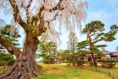 El jardín japonés conmemorativo de Fujita en Hirosaki, Japón fotografía de archivo libre de regalías