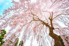 El jardín japonés conmemorativo de Fujita en Hirosaki, Japón imagenes de archivo