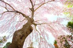 El jardín japonés conmemorativo de Fujita en Hirosaki, Japón imágenes de archivo libres de regalías