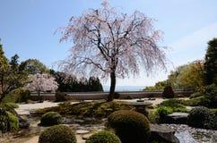 El jardín tradicional japonés Fotos de archivo