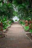 El jardín tropical y el camino al mar varan foto de archivo libre de regalías