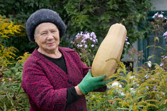 El jardinero imágenes de archivo libres de regalías