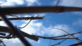 El jardinero activo del hombre poda y arregla arbustos almacen de video