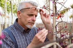 El jardinero adulto examina las enfermedades vegetales Las manos que sostienen la tableta En los vidrios, una barba, guardapolvos fotografía de archivo