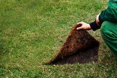 El jardinero aumenta la costura de un c?sped con la hierba Concepto: muestre el lado incorrecto imágenes de archivo libres de regalías