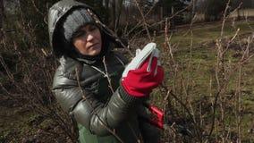 El jardinero de la mujer en los arbustos de la fruta se cierra para arriba almacen de metraje de vídeo