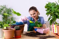 El jardinero de sexo femenino joven con las plantas dentro foto de archivo