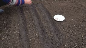 El jardinero está plantando las semillas del rábano metrajes
