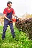 El jardinero profesional se vistió con los guardapolvos de la seguridad usando un seto imagen de archivo