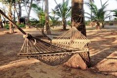 El jardín tropical cuelga el árbol de coco de una hamaca Imágenes de archivo libres de regalías