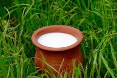 El jarro del alfarero con leche en una hierba Foto de archivo