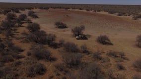El jeep conduce alrededor de un claro grande en la sabana metrajes