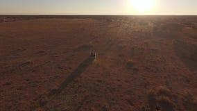 El jeep está montando a lo largo de una sabana del desierto almacen de video