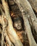 El jefe de la imagen de Buda es cubierto por las raíces del árbol Imagen de archivo