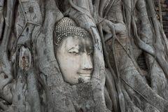 El jefe de la piedra arenisca Buda en el árbol arraiga en el templ del mahathat del wat Imagen de archivo