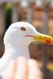 El jefe de una gaviota blanca grande y de la palma estiró hacia el pájaro Imágenes de archivo libres de regalías