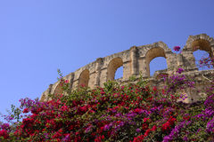 EL Jem Colosseum e viti colorate della buganvillea Fotografie Stock Libere da Diritti