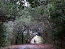 El jinete de la bici de montaña en árbol cubrió el camino Fotografía de archivo libre de regalías