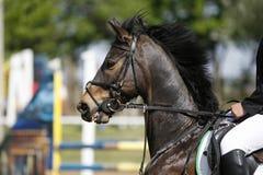 El jinete de salto no identificado supera a caballo barreras Foto de archivo
