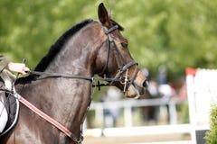 El jinete de salto no identificado supera a caballo barreras Imagenes de archivo