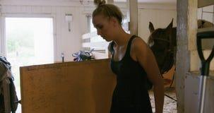 El jinete de sexo femenino joven está llevando un caballo marrón adentro a los establos almacen de metraje de vídeo