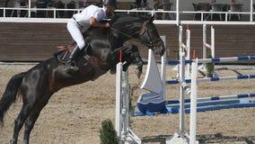 El jinete de sexo masculino profesional irreconocible monta a caballo El caballo es galopante y de salto a través de una barrera  almacen de video