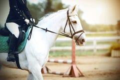 El jinete en un caballo realiza las competencias de la ruta a caballo imagenes de archivo