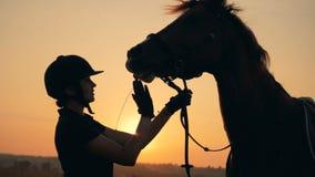 El jinete femenino alimenta un caballo con el heno, cierre para arriba