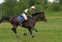 El jinete y el caballo en un país cruzado saltan curso Foto de archivo