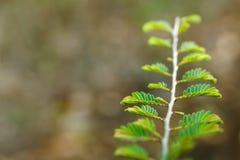 El joven verde deja el primer en mañana de la primavera imagen de archivo