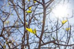 El joven verde fresco se va en una rama de árbol en la luz del sol, hermosa Fotos de archivo libres de regalías