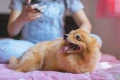El jugar adolescente joven asiático alegre de la muchacha y diversión feliz con su perro en casa Imagen de archivo