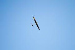 El jugar con mi aeroplano del juguete foto de archivo