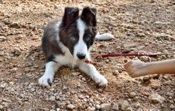 El jugar con mi perro Fotografía de archivo