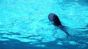 El jugar de los delfínes almacen de metraje de vídeo