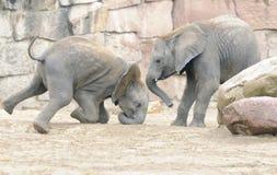 El jugar de los elefantes del bebé Fotos de archivo libres de regalías